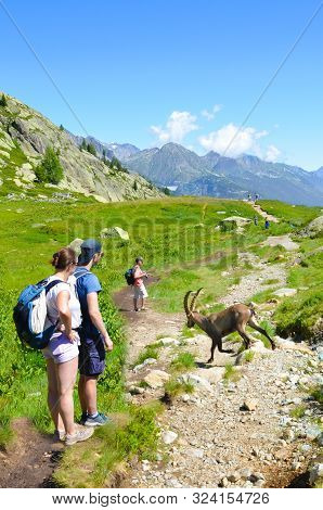 Chamonix-mont-blanc, France - July 30, 2019: Tourists Watching Alpine Ibex In The French Alps. Wild