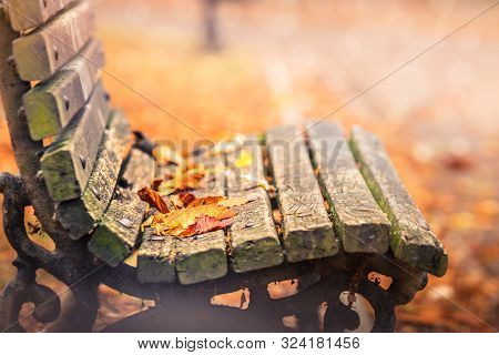 Autumn In The City Park. City Park Bench In Autumn. Public Park In Autumnal Colors. Fall In The Park