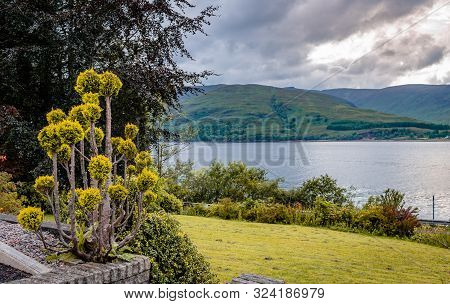 Landscape With Plants And Trees And Loch Linnhe In The Background. Loch Linnhe Is A Sea Loch On The