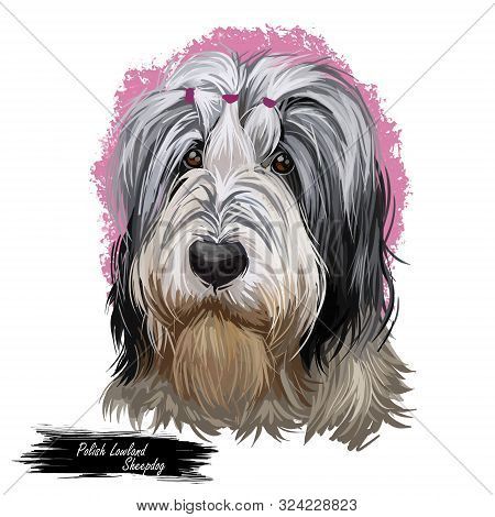 Polish Lowland Sheepdog Dog Portrait Isolated. Digital Art Illustration Of Hand Drawn Dog For Web, T