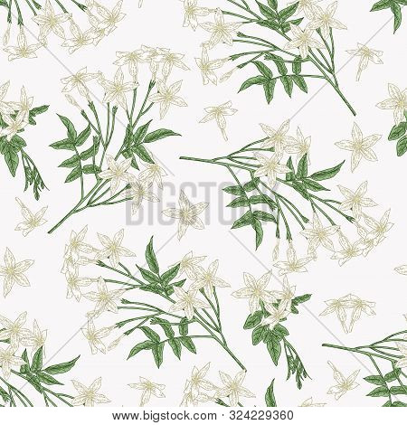 White Jasmine Seamless Pattern. Jasminum Officinale Flowers And Leaves. Summer Plants Hand Drawn. Ve