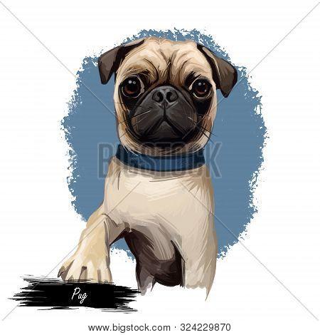Pug Dog Portrait Isolated On White. Digital Art Illustration Of Hand Drawn Dog For Web, T-shirt Prin