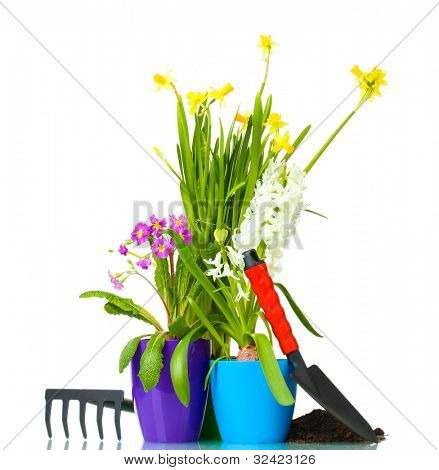 Beautiful spring flowers, soil and tools isolated on white