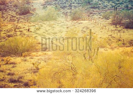A Sunset Over A Saguaro Cactus In The Sonoran Desert Of Arizona Panorama.