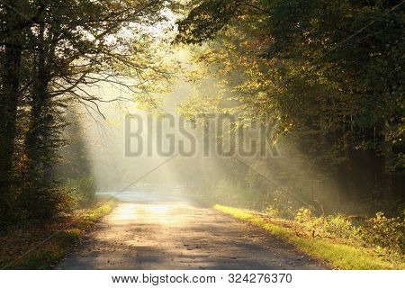 Sun rays sunbeams autumn forest Nature landscape Nature background Forest sunrise Path Nature Colors leaves foliage orange Nature background Autumnal forest Travel Nature outdoors Nature background Trees fall woods Road fog mist sunshine Nature background