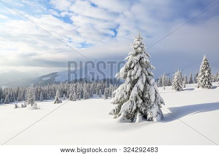 Winter Scenery In The Sunny Day. Mountain Landscapes. Trees Covered With White Snow, Lawn And Mister