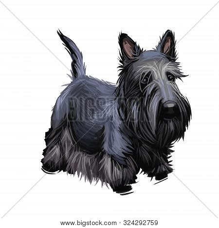 Scottish Terrier Domestic Animal Originated From Britain Scolnad Doggy Digital Art Illustration . Do
