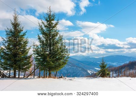 Two Three Fir Trees On The Snowy Meadow In Wintertime. Beautiful Alpine Scenery On A Sunny Day In Mo