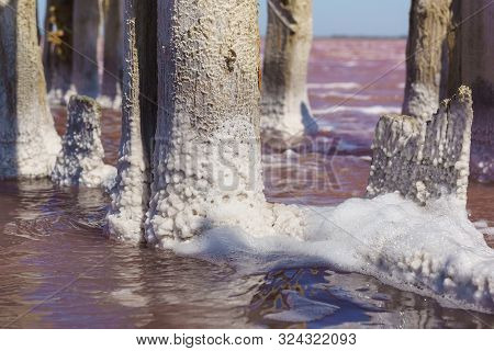 Salt Crystals On Thick Logs In The Pink Lake Sasyk-sivash Near The Resort Town Of Yevpatoria In The