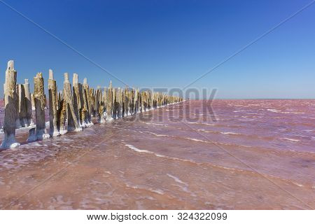 Wooden Remains Of The Destroyed Dam On The Salt Lake Sasyk Sivash Bright Pink. Clear Blue Sky Over T