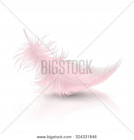 Vector 3d Realistic Falling Pink Flamingo Fluffy Twirled Feather With Reflection Closeup Isolated On