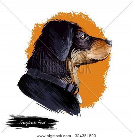 Transylvanian Or Hungarian Hound Dog Breed Portrait Isolated On White. Digital Art Illustration, Ani