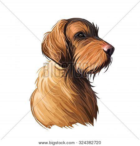 Wirehaired Vizsla Dog Breed Portrait Isolated On White. Digital Art Illustration, Animal Watercolor