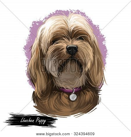 Lowchen Puppy Doggy Petit Chien Lion Digital Art. French Originated Domesticated Animal Of Small Siz