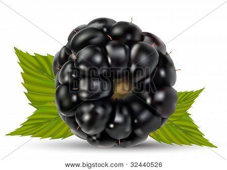 Dewberries (blackberries)