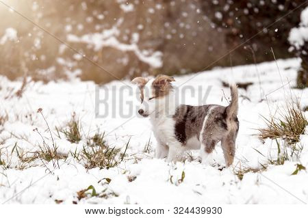 Puppy Or Young Dog In The Snow With Snowflakes And Sunshine, Winter And Whelp