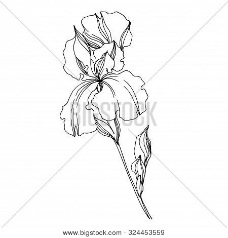 Vector Iris Floral Botanical Flowers. Black And White Engraved Ink Art. Isolated Irises Illustration
