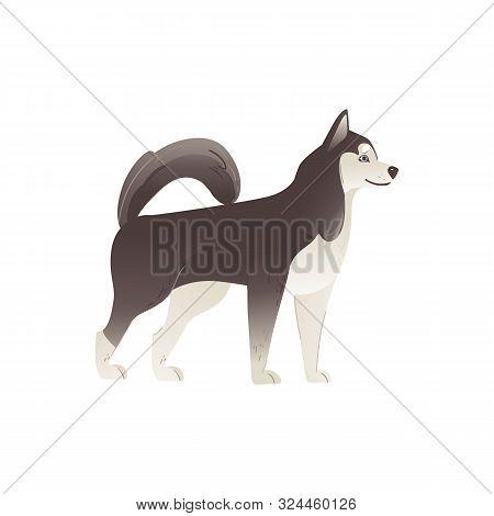 Alaskan Malamute Or Siberian Husky North Dog Flat Vector Illustration Isolated.