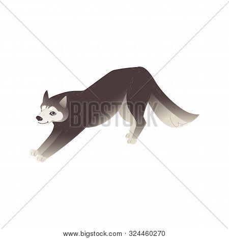 North Husky Dog Or Alaskan Malamute Puppy Flat Vector Illustration Isolated.
