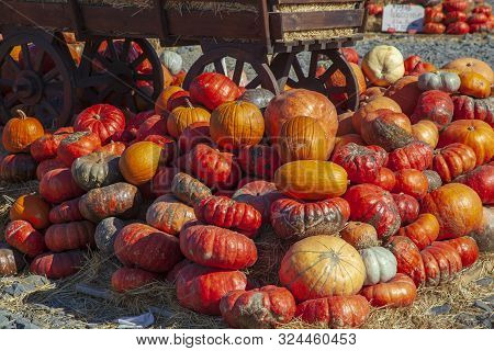 A Rustic Autumn Still Life With Pumpkins , Large Different Pumpkins, Different Varieties Of Pumpkins