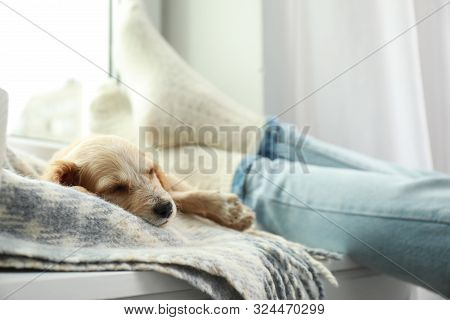 Cute English Cocker Spaniel Puppy Sleeping On Blanket Near Owner Indoors