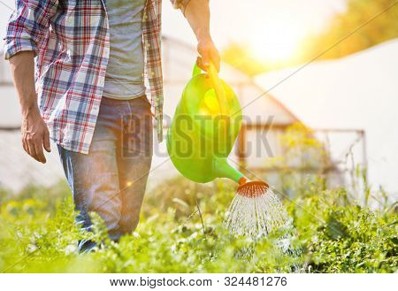 Male Farmer watering plants on farm using green watering can with yellow lens flare in background
