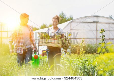 Female farmer carrying newly harvest vegetables while male farmer watering plants with yellow lens flare in background