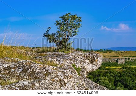 Tree On The Crag In The Balcan Mountains