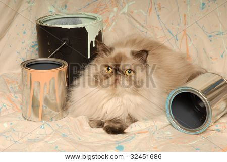 Himalayan Cat And Paint Cans