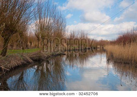 Pollard Willows Along A Reflective Creek