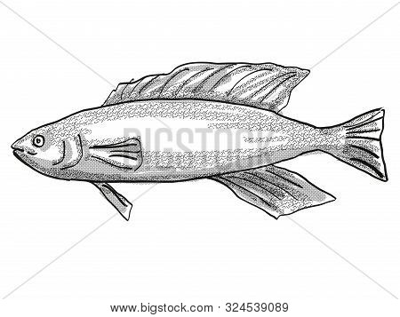 Retro Cartoon Style Drawing Of A Butterfish Or Odax Pullus , A Native New Zealand Marine Life Specie