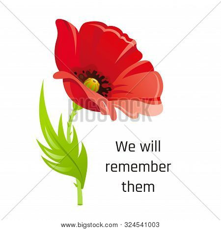 Vector Illustration Eps10, Isolated Background. Realistic Red Poppy Flower Symbol, 3d Remembrance Da