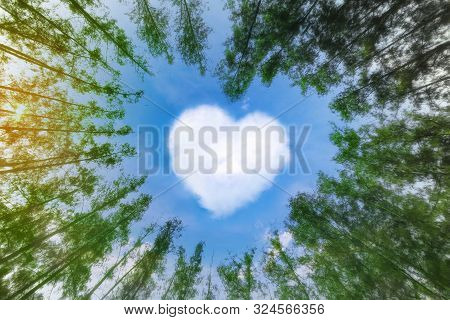Heart Shaped Cloud Over Blue Sky Surrounded By Pine Trees. White Cloud In The Shape Of Hearts In The