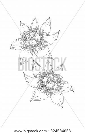 Flowers, Lotus Line Expand Icon On White Background