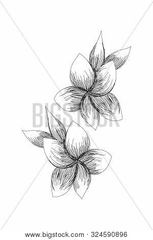 Flowers, Narcissus Line Expand Icon On White Background
