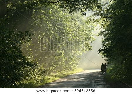 Cyclists ride road spring forest sunset Nature landscape Nature background Fresh lush foliage Forest Path Nature Natural environment in forest Nature background Hiking Nature outdoors Nature Road sunshine fog mist sun Nature background Trees spring woods.