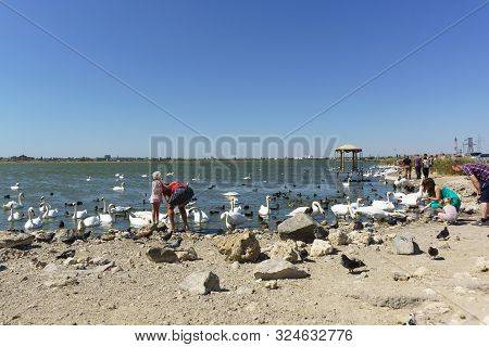 Yevpatoria, Crimea, Russia-09 September 2019: People Feeding Water Birds: Coots (lat. Fulica Atra),