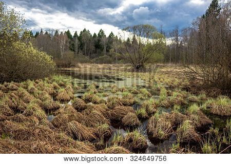A Wetland Pond With Hummocks And Grass, A Springy Cloudy Day