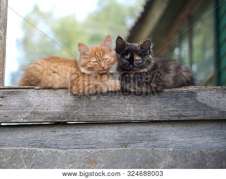 Cute Kittens Lie Snugly Together On An Old Board