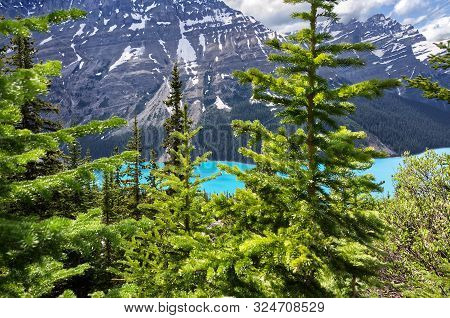 Mountain Landscape With Pine Forest And Turquoise Peyto Lake, Banff National Park, Alberta, Canada