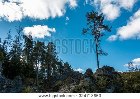 Sea Of Rocks With Huge Rocks And High Trees
