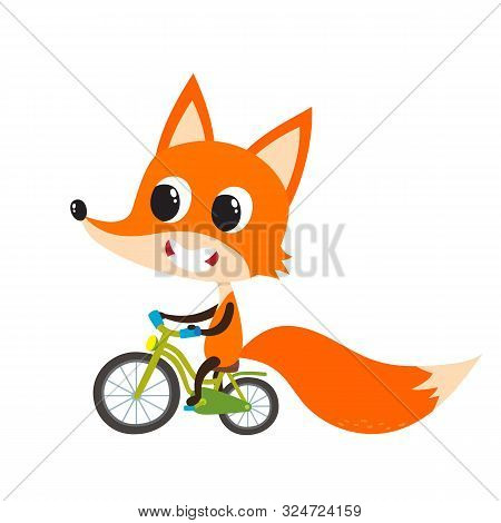 Vector Set Of Cartoon Funny Fox Isolated On White Background.