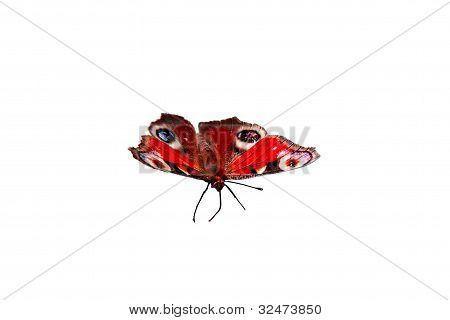 The Beautiful Butterfly On A White Background