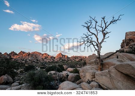 Joshua Tree National Park Is An American National Park In California, East Of Los Angeles. The Park