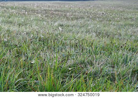 Morning Dew On The Autumn Meadow , Southern Bohemia , Czech Republic