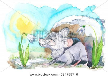 Watercolor Illustration For Calendar 2020, Cards And Posters. Month Of March. Mouse Sniffs A Snowdro