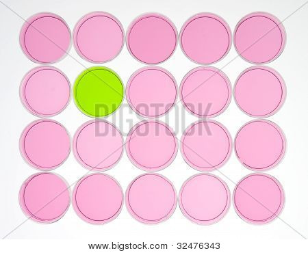 Pink and Green Circles