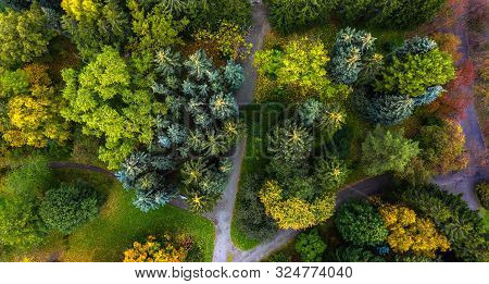 Spruce Tops With Paths In Autumn Park, The View From The Drone