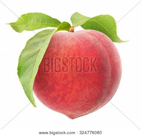 Isolated Peach. One Raw Pink Peach Hanging On A Stem With Leaves Isolated On White Background With C