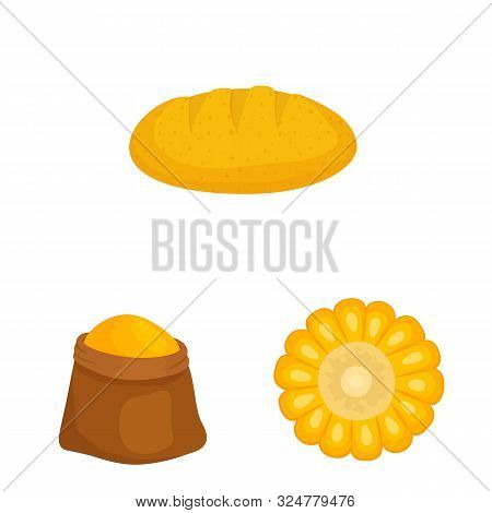 Isolated Object Of Maize And Food Logo. Collection Of Maize And Crop Stock Symbol For Web.